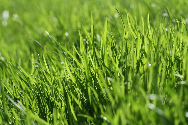芝焼きをしてみました(庭の芝生管理)