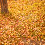 庭にどんどん舞い込んでくる落ち葉を食い止めたい&掃除を楽にしたい。