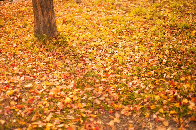 庭 落ち葉 掃除 侵入 流入 対策