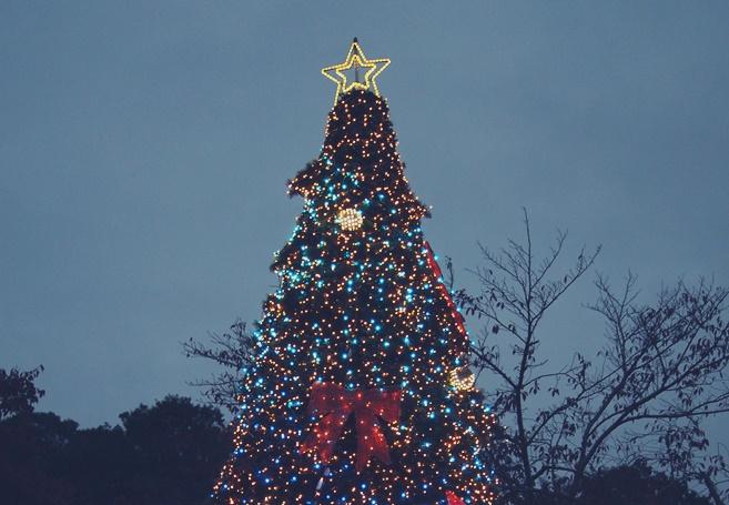 相模湖 プレジャーフォレスト イルミリオン クリスマスツリー