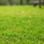 春の恒例行事となるか?芝焼き2017と春の庭の準備。