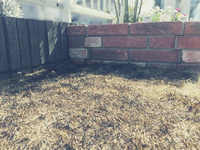 芝 芝生 芝庭 芝焼き サッチ 成長促進 害虫 病気 雑草 駆除 駆除 予防 芝焼き中