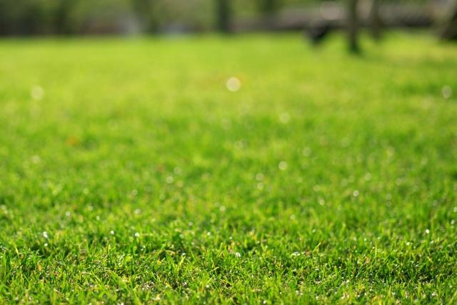 芝 芝生 芝庭 芝焼き サッチ 成長促進 害虫 病気 雑草 駆除 駆除 予防