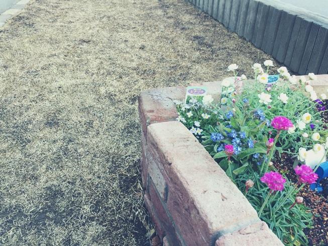 芝 芝生 芝庭 芝焼き サッチ 成長促進 害虫 病気 雑草 駆除 駆除 予防 芝焼き完了