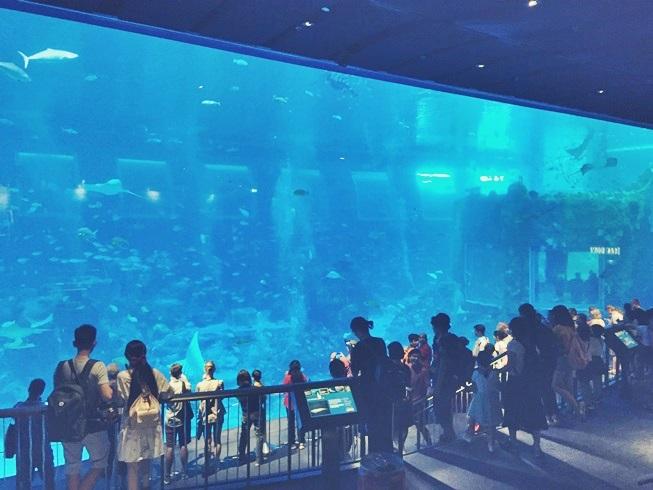 シンガポール セントーサ 島 シー アクアリウム 世界最大 水族館